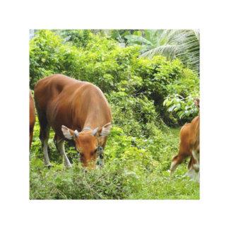 Vacas de Bali Lona Envuelta Para Galerías