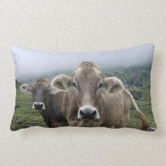 Vacas de Braunvieh Cojines