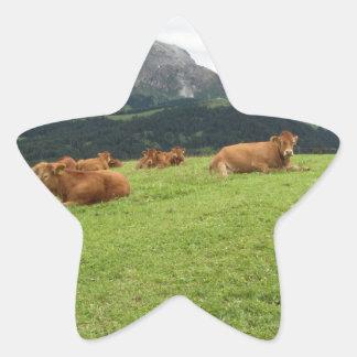 Vacas de Brown en pastos alpinos en verano Pegatina En Forma De Estrella