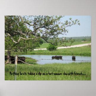 Vacas de inmersión flacas póster