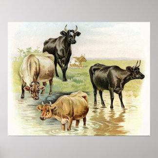 Vacas de los animales del campo del arte del vinta poster