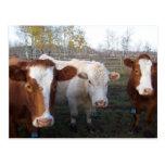 Vacas de los Postal-Animales-