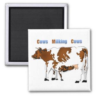 Vacas de ordeño de las vacas imán cuadrado