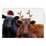 Vacas del día de fiesta del navidad en el gorra y  felicitación