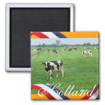 Vacas del Frisian en regalo anaranjado del imán de