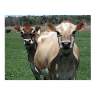 Vacas del jersey postal