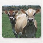 Vacas del jersey tapetes de ratón