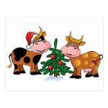 Vacas del navidad tarjetas postales