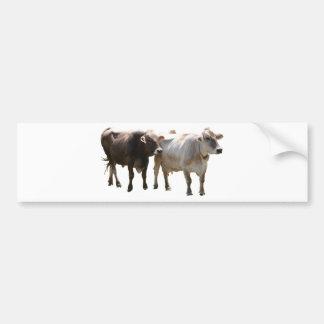 Vacas del suizo de Brown Etiqueta De Parachoque