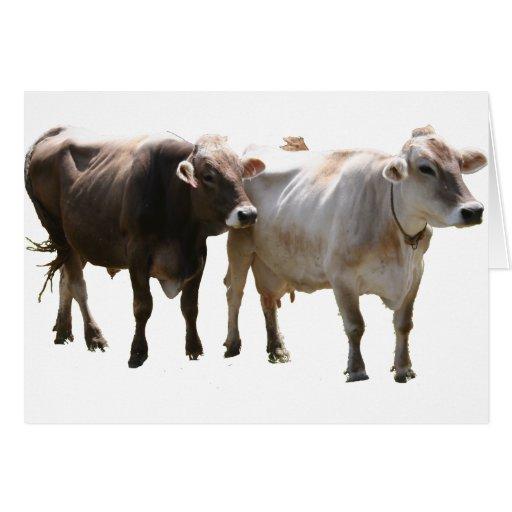 Vacas del suizo de Brown Felicitaciones
