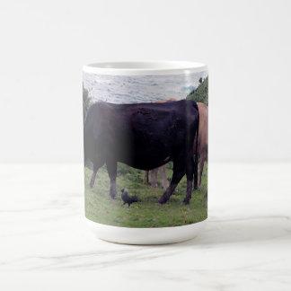 Vacas del sur de la costa costa dos de Devon y un  Taza