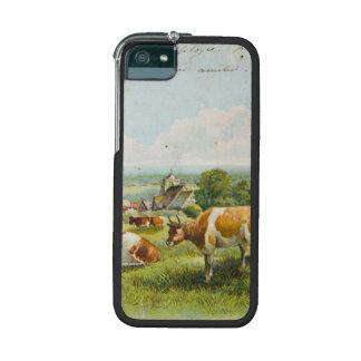 Vacas del vintage en una postal del campo
