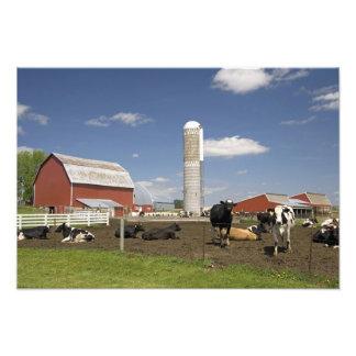 Vacas delante de un granero y de un silo rojos en  fotografías