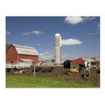 Vacas delante de un granero y de un silo rojos en postal
