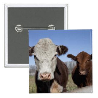 Vacas en área cercada pin cuadrado