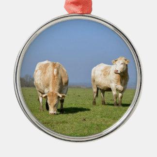 Vacas en campo adorno redondo plateado