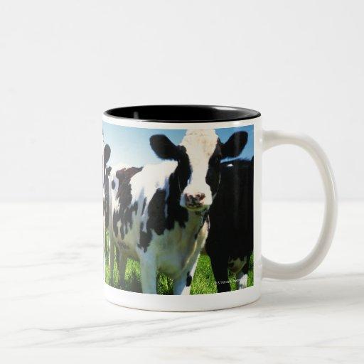 Vacas en el campo, ciudad de Betsukai, Hokkaido Taza De Dos Tonos