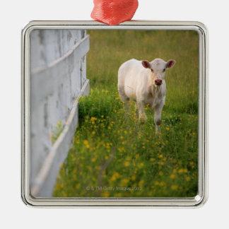 Vacas en el campo adorno cuadrado plateado