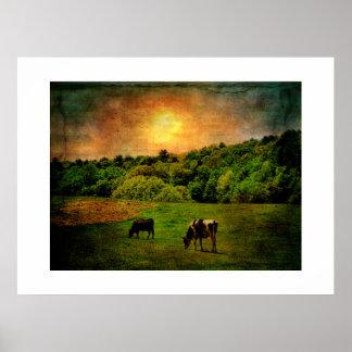 Vacas en el campo impresiones