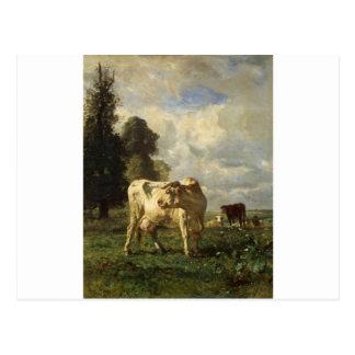 Vacas en el campo por Troyon constante Postal