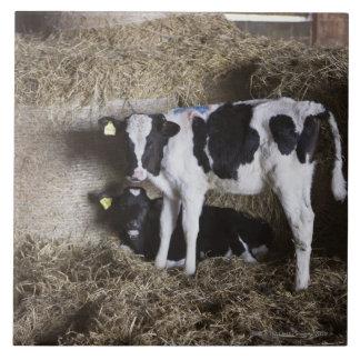 Vacas en el granero 3 azulejo cuadrado grande