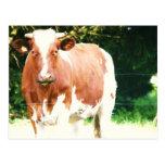 vacas en el kermarhin 030 postales
