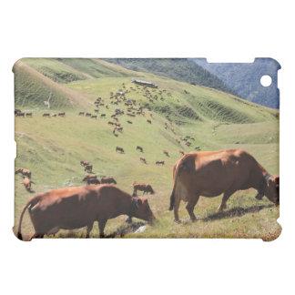 vacas en el valle de Tarentaise - raza de Tarine