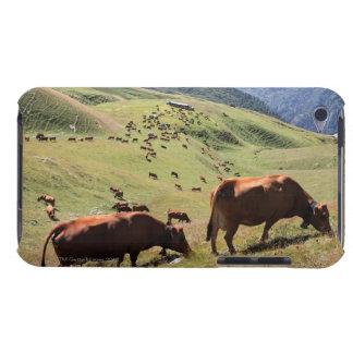 vacas en el valle de Tarentaise - raza de Tarine Cubierta Para iPod De Barely There
