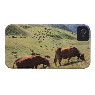 vacas en el valle de Tarentaise - raza de Tarine Funda Para iPhone 4 De Case-Mate