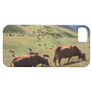 vacas en el valle de Tarentaise - raza de Tarine Funda Para iPhone SE/5/5s
