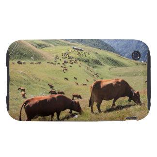 vacas en el valle de Tarentaise - raza de Tarine Funda Though Para iPhone 3