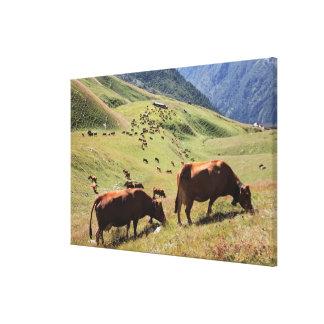 vacas en el valle de Tarentaise - raza de Tarine Impresiones En Lona Estiradas