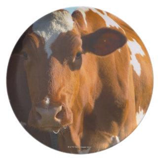 Vacas en granja plato