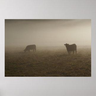 Vacas en la foto de la niebla póster