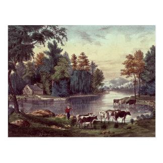 Vacas en la orilla de un lago postales