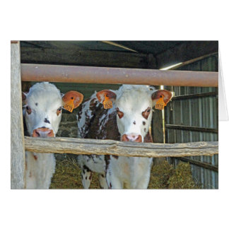 Vacas en la vertiente tarjeta de felicitación