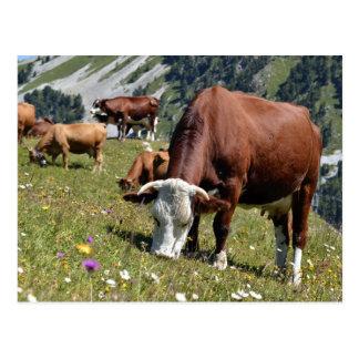 Vacas en las montañas francesas postal