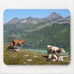Vacas en las montañas tapete de ratón