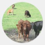 Vacas en País de Gales Etiquetas Redondas