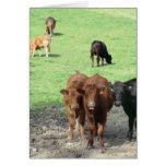 Vacas en País de Gales Felicitación