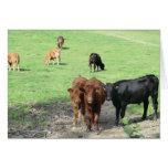 Vacas en País de Gales Tarjeta