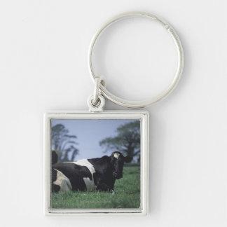 vacas en un pasto llavero cuadrado plateado