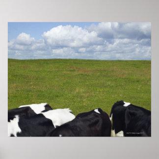 Vacas en un pasto póster