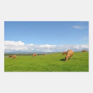 Vacas en un prado en el pegatina rectangular de