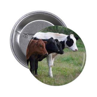 Vacas en una fila pin