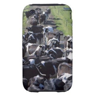 Vacas lecheras de Fresian, aguardando el ordeño, Carcasa Resistente Para iPhone