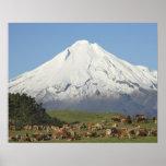 Vacas lecheras y tierras de labrantío cerca de Oka Póster