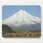 Vacas lecheras y tierras de labrantío cerca de Oka Tapete De Ratones