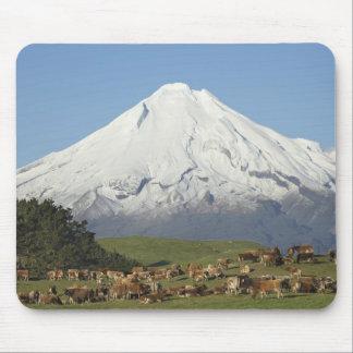 Vacas lecheras y tierras de labrantío cerca de Oka Alfombrilla De Ratones