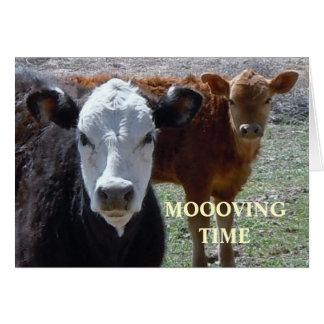 Vacas lindas - cambio de dirección occidental tarjeta pequeña